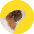 Gəmiricilər və dovşanlar